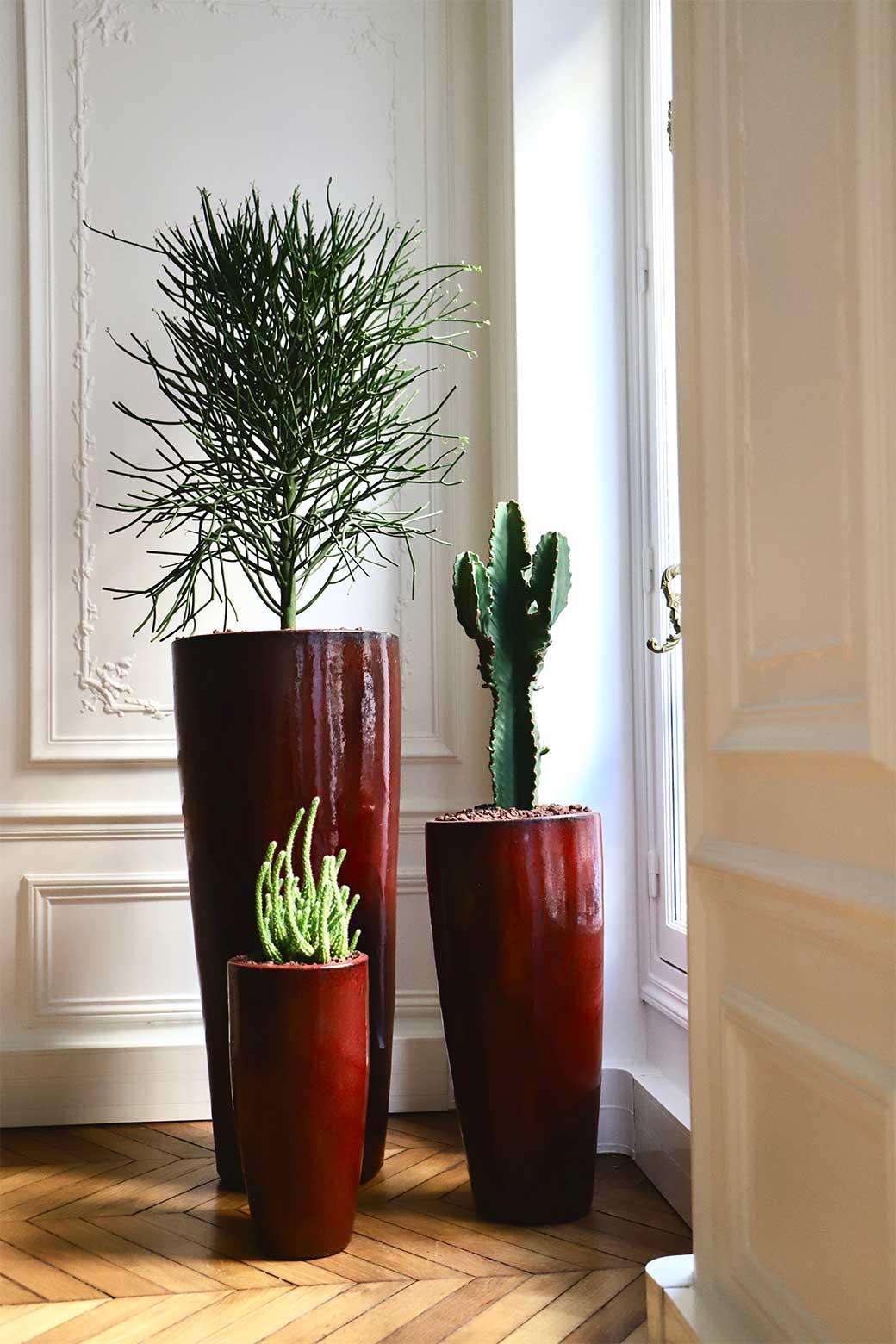 plantes-bureau-virginie-drouot