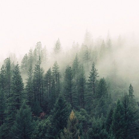 trees-bg